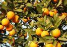 سهم ۱۰ درصدی فارس در تامین غذای ایرانیان