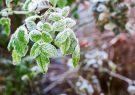 خسارت میلیاردی سرما به باغها و اراضی کشاورزی اقلید