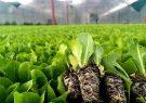 تولید سالانه ۱۸میلیون نشا مکانیزه در شهرستان کوار