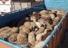 کشف ۲۸۵ رأس احشام قاچاق در لارستان