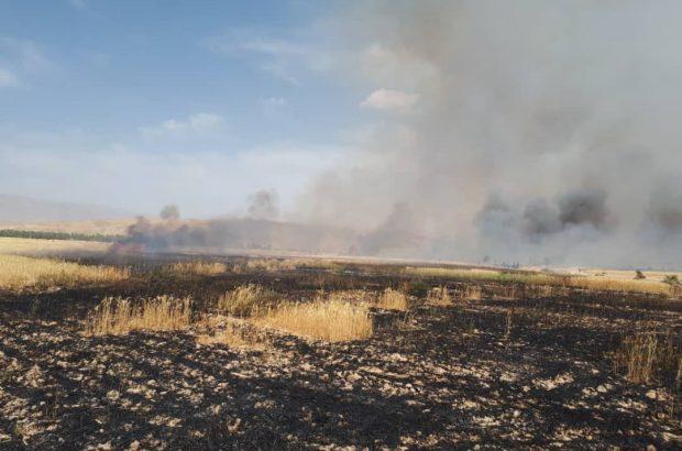 مهار آتش در مزارع گندم کازرون
