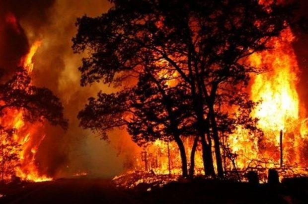 آتش در ارتفاعات میمند