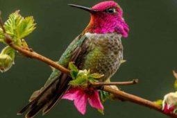 ویدئویی جذاب از تغییر رنگ پرندهای زیبا