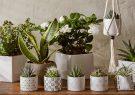۱۷ گیاه آپارتمانی که حشرات را از خانه شما دور خواهند کرد
