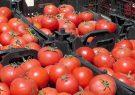پیش بینی برداشت ۷۷ هزار تن گوجهفرنگی در ارسنجان